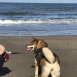 柴犬を飼って6年。生活はこう変わりました。はじめて犬と暮らした体験談。