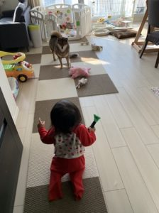 赤ちゃんと犬の同居の様子