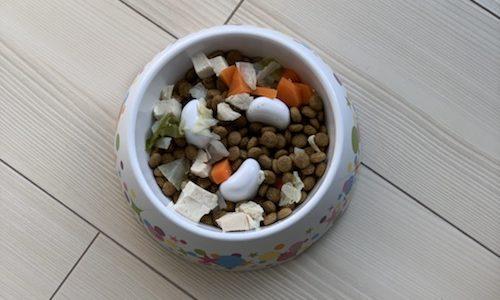 【ドギーマン ゆっくりデコボコ食器レビュー】食い防止食器はダイエットに効果あり?