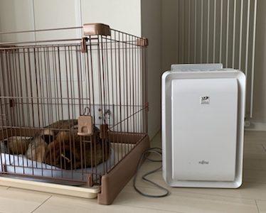 【富士通ゼネラル プラズマイオン 加湿脱臭機 DAS-303E-Wレビュー】犬と脱臭機の話