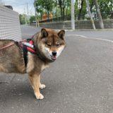 【デメリット】犬を飼う時に後悔しないために確認しておいた方が良いこと