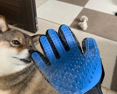 【ペットグルーミンググローブレビュー】グローブ型犬用ブラシを使った感想