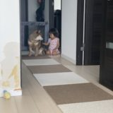 【事故防止】やきもちは?赤ちゃんと犬の同居生活で気をつけた方が良いと思うこと