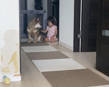 【体験談】犬と赤ちゃんの同居で気をつけた方が良いこと