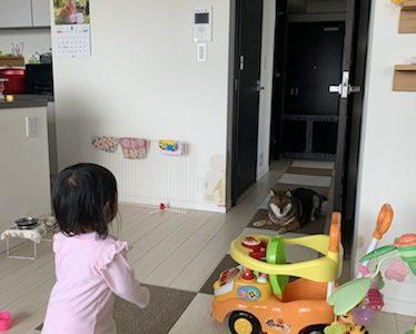 【体験談】赤ちゃんと犬がいる生活についてのまとめ