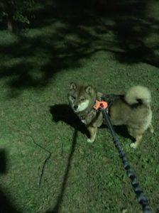 Rabbitgoo 犬 ハーネスは夜目立つ