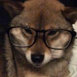 保護犬を引き取って3年。胡麻柴の花との思いで。