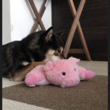 【柴犬あずきお気に入り】ドギーマン ほわぺたZOO  犬用の紹介