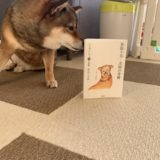 【「看取り犬・文福の奇跡」を読んだ感想・レビュー】高齢になってから犬と過ごすことについて考えさせられました。