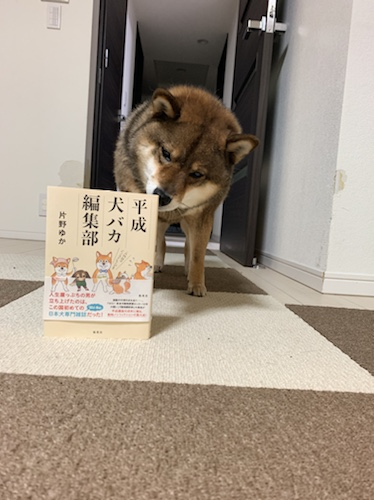 平成犬バカ編集部と柴犬