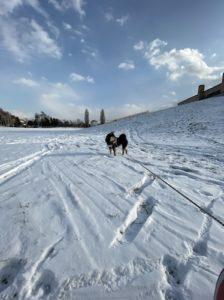 iPhone11の超広角モードで撮影した犬の写真