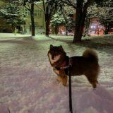 ようやく根雪の予感