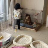 2歳児と柴犬