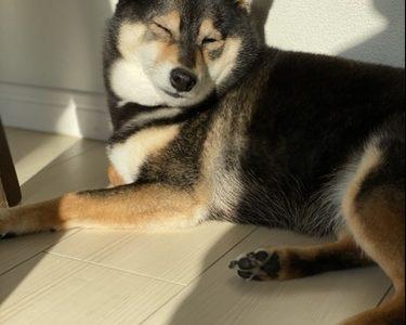 犬の散歩から帰ってきたら足を洗います?洗った方が良い理由や洗い方について