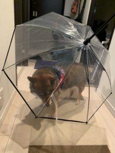リード付傘