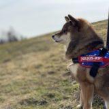 【2021年おすすめ】犬のうんち袋を使ってみた感想と口コミ【比較】
