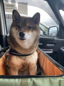 ドライブボックスに乗る犬