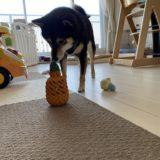 【失敗・・?】パイナップル型「犬の噛むおもちゃ」の口コミ・レビュー