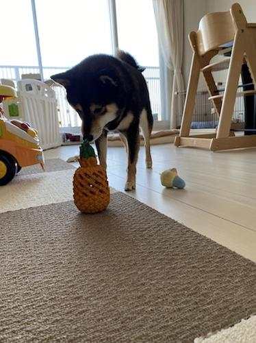 パイナップルとあずき