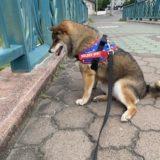 夏バテしやすい犬ってどんな犬?
