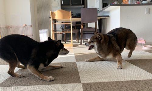 我が家のおかーぽん(妻)の犬好き故の仰天エピソード