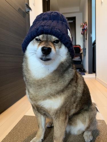 帽子をかぶる柴犬の花