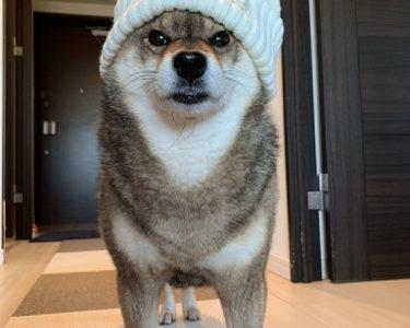 【保存版】犬の散歩のうんちの取り方