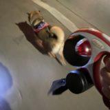 【犬用リードアクセサリー】フレキシ (flexi) マルチボックスを買った感想・レビュー・レポ