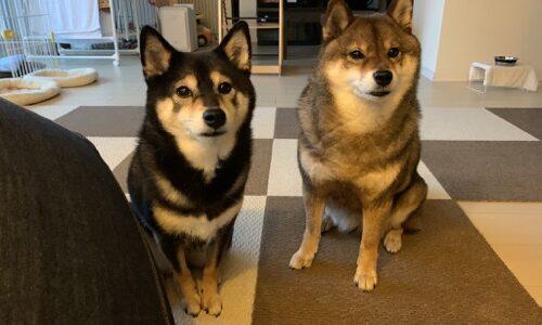 犬のご近所トラブルを防ぐために飼い主が守るべきこと