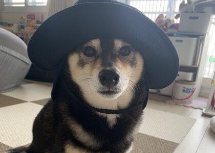 犬との生活に役立つ記事