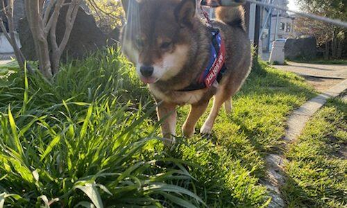 犬が草を食べる理由とやめさせた方が良い理由