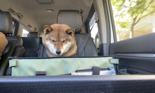 助手席に犬を乗せるのは違法?最悪逮捕されるのはどんな時?