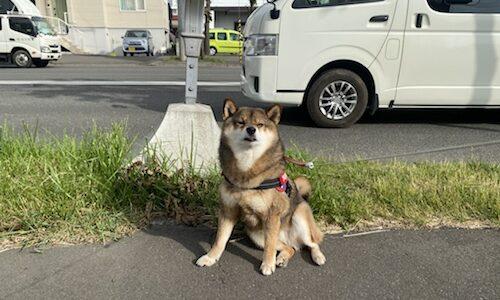 札幌に出没したクマのことで思うこと