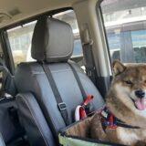 保護犬と出会う方法にはどんなものがあるの?譲渡会?保健所?